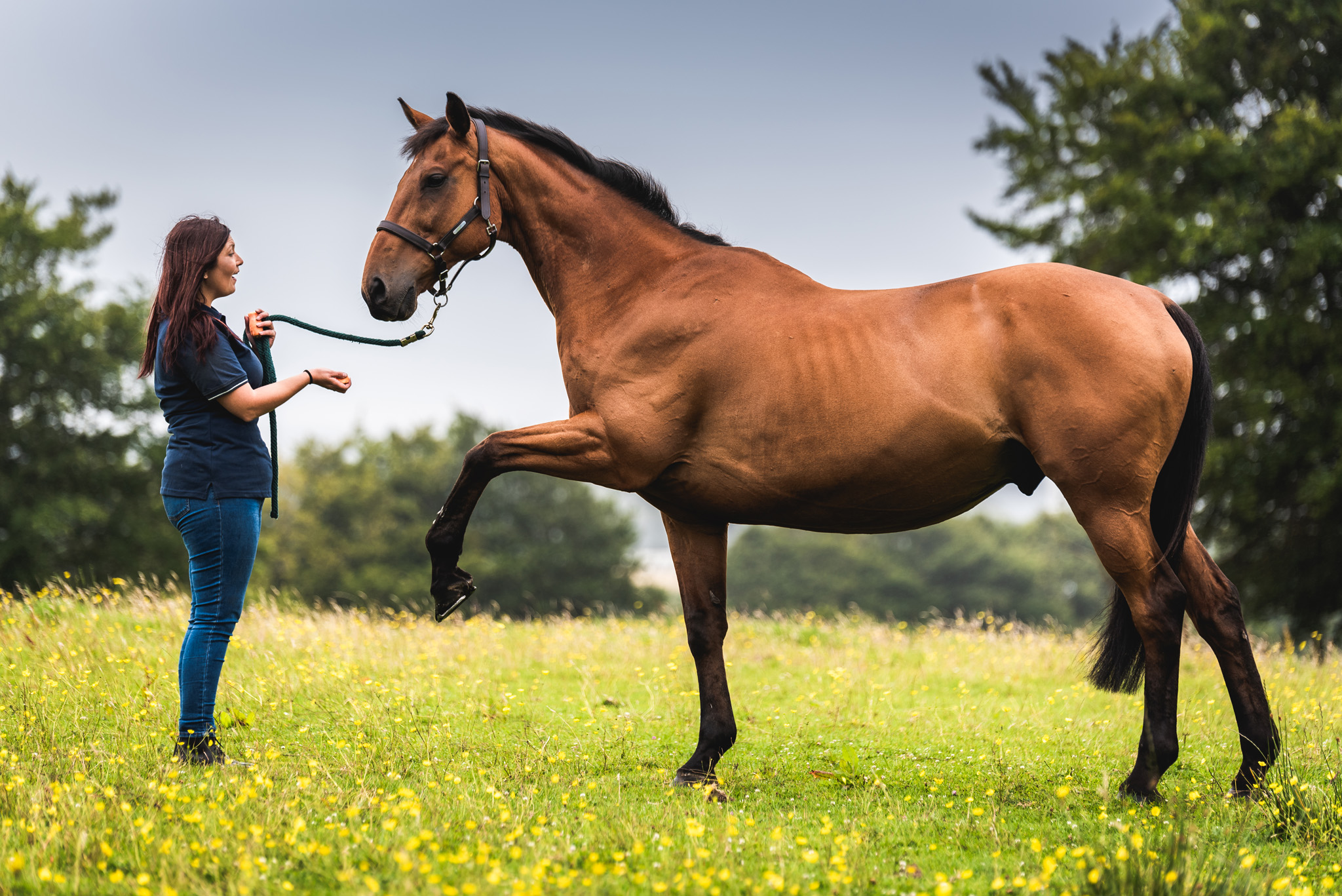 Equine Horse Portraits South Wales
